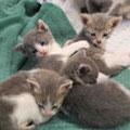 4 Kitten von Marli