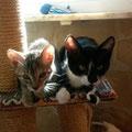 Kitty und Katy