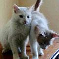Jules und Jagger