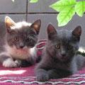 Luna und Achat
