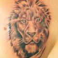 קעקוע אריה