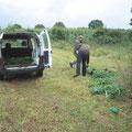 Ausladen der rund 350 in Töpfen vorgezogenen Wiesenpflanzen.