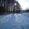 Neu angelegtes Kleingewässer im ersten Winter.