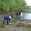 Die frisch gepflanzten Sträucher bekamen als Starthilfe eine Mulchschicht aus Stroh und einen Verbissschutz.