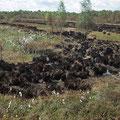 Deutlich ist zu sehen, dass nur die trockeneren, mit Pfeifengras bewachsenen Bereiche abgebrannt sind.
