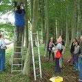 Erwartungsvolle Blicke bei der Kastenkontrolle im 'Fledermauswald' ...