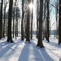"""Winterimpression aus unserem vereinseigenen """"Fledermauswald"""" - der Altbuchenbestand ist inzwischen Lebensraum von vier Fledermausarten."""