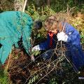 Pflanzung von heimischen Wildsträuchern am Waldrand - gedeckter Tisch für Vögel, Insekten und Fledermäuse.