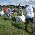In BigBags wird das Mahdgut von der Fläche geschafft und kompostiert.