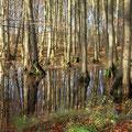 Der Verschluß des Entwässerungsgrabens zeigt Wirkung: Angestaute Waldsenke am Rand des Fledermauswaldes.