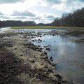Neue Sandbänke im Uferbereiche nach dem Frühjahrshochwasser.