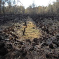 Auch kleine nasse Bereiche in ansonsten großflächig verbrannten Bereichen widerstanden dem Feuer.