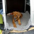 meine Hundebox