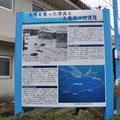 0377 久慈を襲った津波と久慈湾港防波堤の説明
