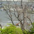074 日和山から見た旧北上川の護岸工事状況(右岸~中瀬~左岸)