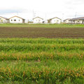 1163 幾世橋住宅団地と耕作地