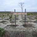 2693 「みどりの防災林」の中の「森林との共生を考える会」の植樹
