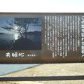 297 越喜来地区を見渡す高台に設けられた慰霊の場所(夫婦松)