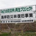 2695 荒浜での「みどりの防災林」再生プロジェクト