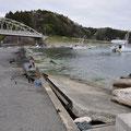 0164 小室漁港の復旧状況(荷上場の水没状況)