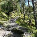Schöner Steig durch lichten Wald