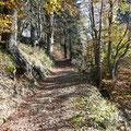 Herbststimmung am Wegesrand