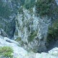 Blick in die Bachschlucht beim Aufstieg zur Sulzlalm