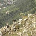 Ziegen am Vellauer Felsenweg