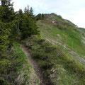 Am Weg zum Grünhorn