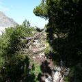 Unterwegs zur Wanne Alpe