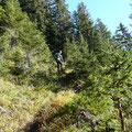 Aufstieg durch den Gföllwald
