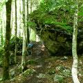 Steig durch Mischwald