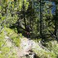 Aufstieg durch lichten Wald,oberhalb des Alpbachtals.