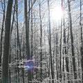 Die ersten Sonnenstrahlen dringen durch