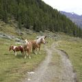 Unterwegs im Penaud Tal