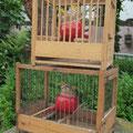 Royale Singvögel in antiken Käfigen