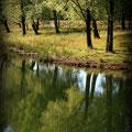 fotografie, landschap fotografie, landschaps fotografie, Paddestoel, Paddestoelen , Mushrooms, oosterhout, bsafoto.com,