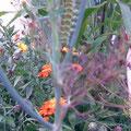 Die kleine Raupe Nimmersatt, zu welchem Schmetterling gehört weiß ich leider nicht!
