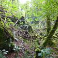 Im Bannwald © Hartmut Hermanns