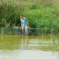Reusenkontrolle - Eine Helferin vom NABU Wannweil unterstützt Vogelberingung