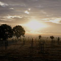 Morgenstund -  Foto Andrea Weinke, Gross Laasch Flexibel e.V.