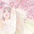 うつろい 桜 2015.2