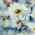 daisies II  / Aquarell 23x30 auf Arches
