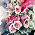 Foxglove I (O1) / Watercolour 17x20cm on Arches CP ©janinaB