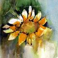 Sunflower I /Watercolour 17x24cm Lukas