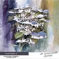 hydrangea V / Watercolour 30x40cm on Fabriano CP © janinaB. 2016
