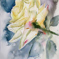 rose IX 2016 (O1) / Watercolour 20x30cm on Fabriano CP © janinaB. 2016