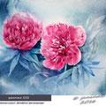 peonies III  / Watercolour 30x40cm  Gerstaecker © janinaB. 2016