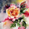 2. Rose / Aquarell 24x30cm
