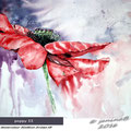 poppy II - Watercolour 30x40cm Arches HP © janinaB. 2016